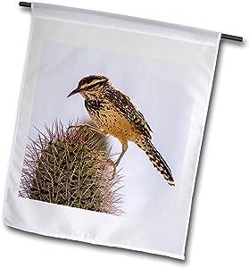 3dRose USA, Arizona, Sonoran Desert. Cactus Wren Perched on Cactus Thorns - Flags (fl_331007_2)