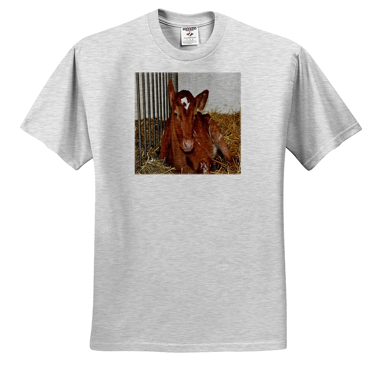 Ayrshire Calf Laying Down 3dRose Dreamscapes by Leslie Adult T-Shirt XL Animals ts/_314216