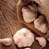 Organic Softneck Garlic Early Italian Purple - Perfect for Braiding & Mild Climates - 1/2 lb. Garlic Bulbs for Planting!