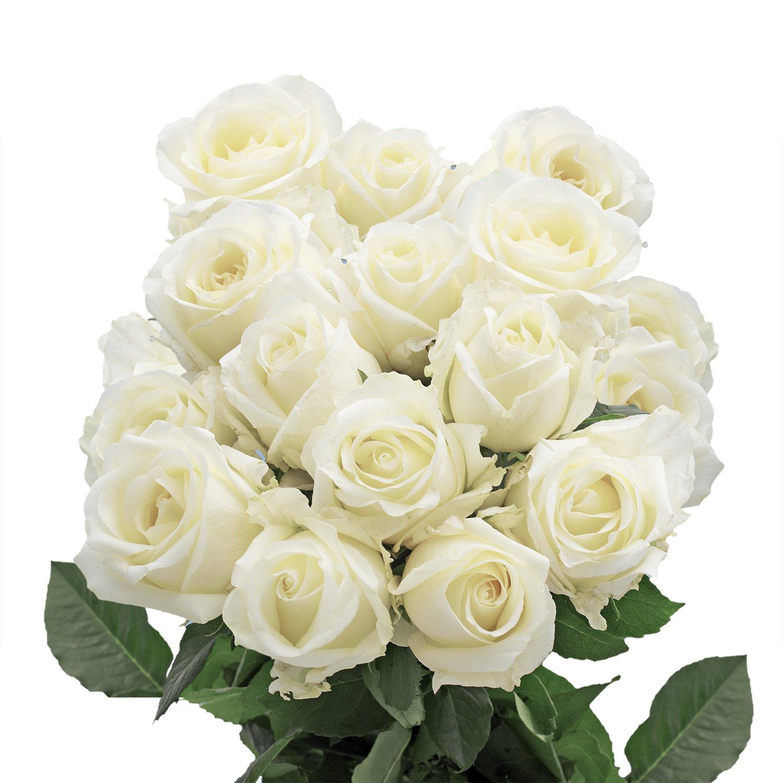 Amazon Globalrose 100 White Roses Fresh Long Stem Flower
