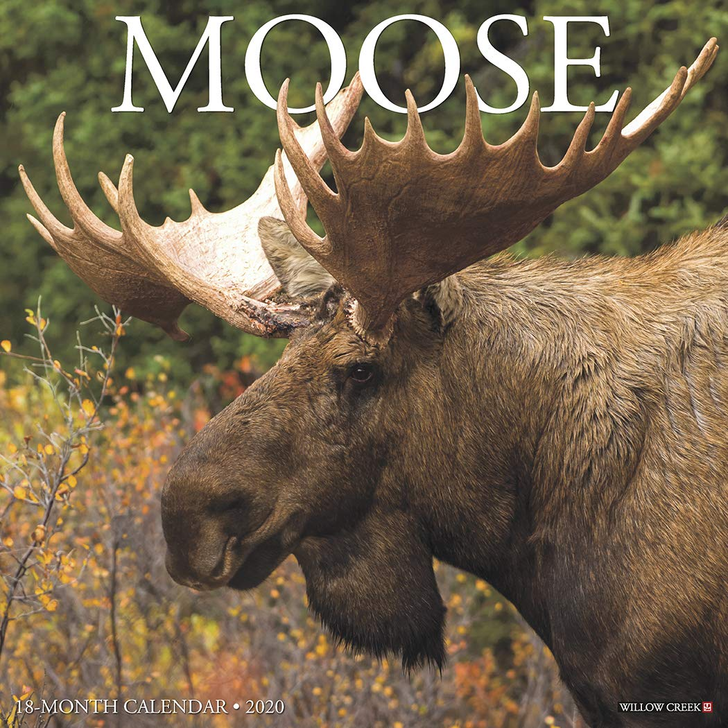 Moose 2020 Wall Calendar: Willow Creek Press: 9781549207174: Amazon.com:  Books