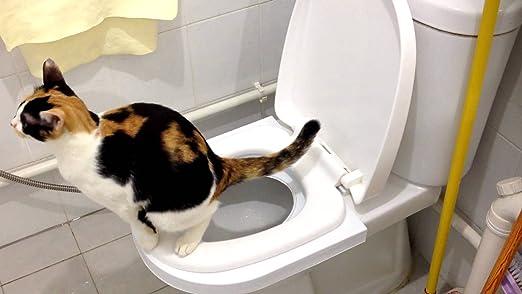 Ducomi Bobo - Kit para el Entrenamiento de Gatos - Entrene a su Mascota a Usar el Inodoro - Útil Alternativa del Arenero - Práctico WC para su Gato ...