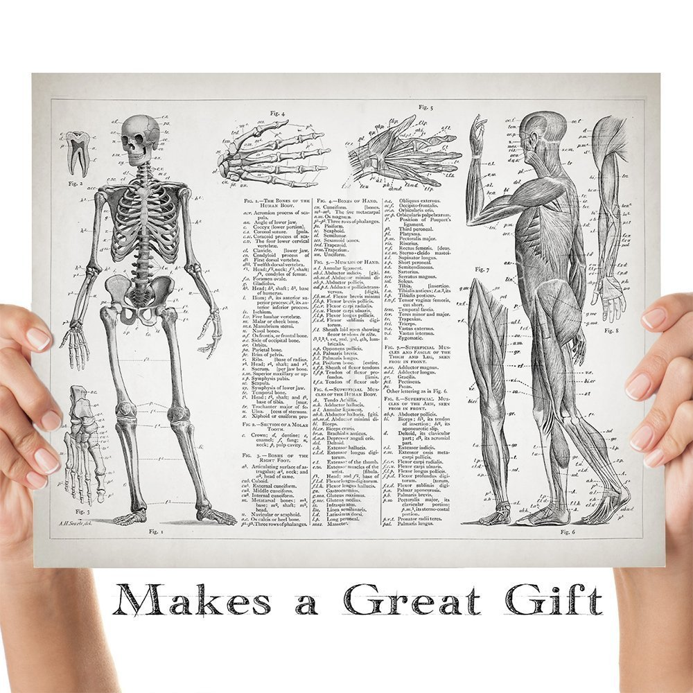 anatomy for nursing students image collections human anatomy