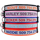 Reflective Personalized Dog Collar, Custom Embroidered w/ Pet Name & Phone - Blue, Black, Pink, Red & Orange Collars for Boy & Girl Dogs; 3 Adjustable Sizes: Small, Medium, & Large. Highly Reflective.