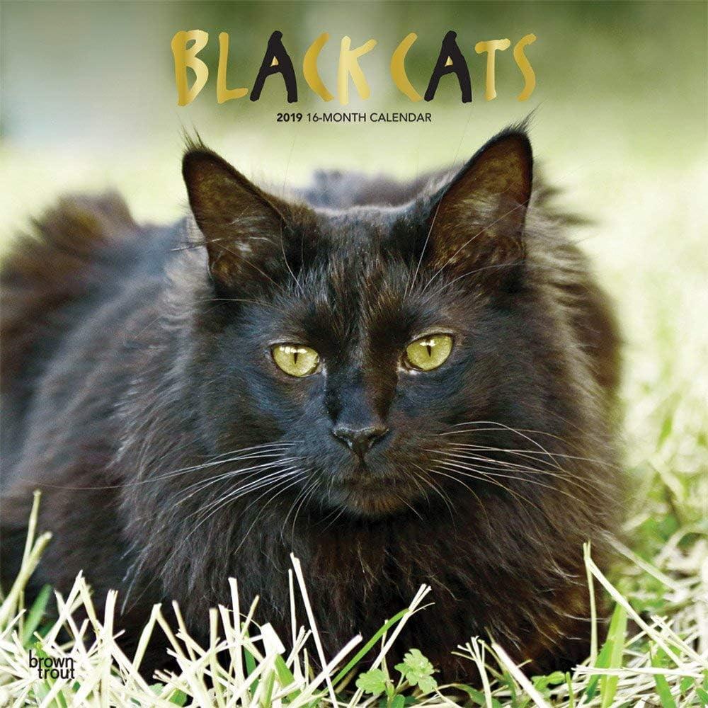 Calendario 2019 gatos negros – gatito negro – gatitos y gatos diseños – humor gatos + incluye un – Agenda de bolsillo 2019: Amazon.es: Oficina y papelería