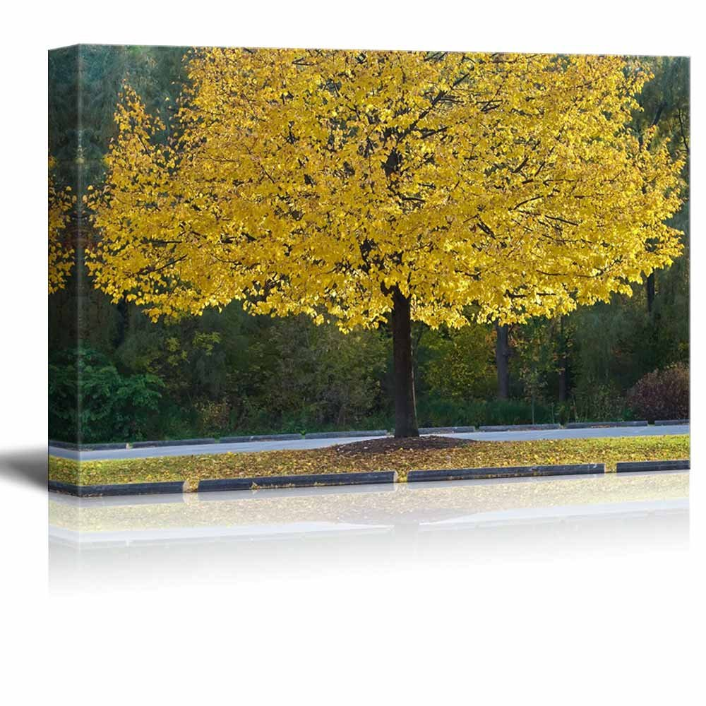 Canadian Yellow Tree with Highlighted Branches in a Park Wall Decor ...