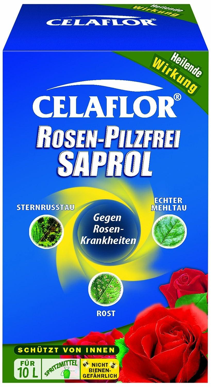 Rosenrost Behandlung celaflor pilzfrei saprol 250 ml amazon de garten