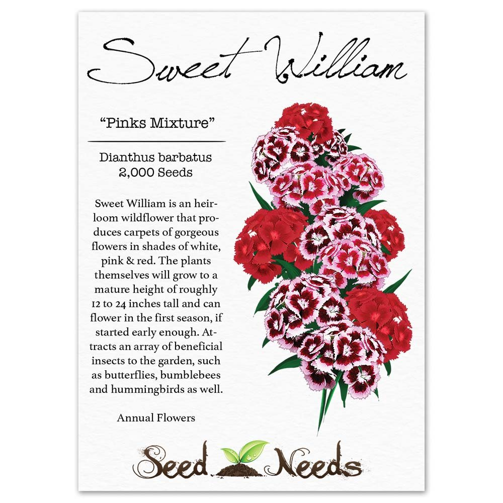 Amazon Package Of 2 000 Seeds Sweet William Mixture