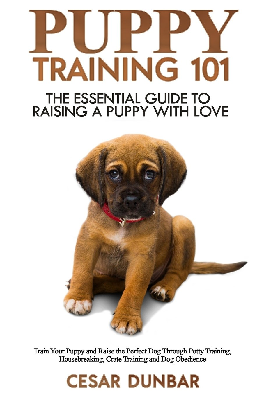 Dog Training 101: Housebreaking a Puppy