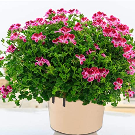popchilli Bolsas de Cultivo de Plantas de 20 galones, Bolsas ...