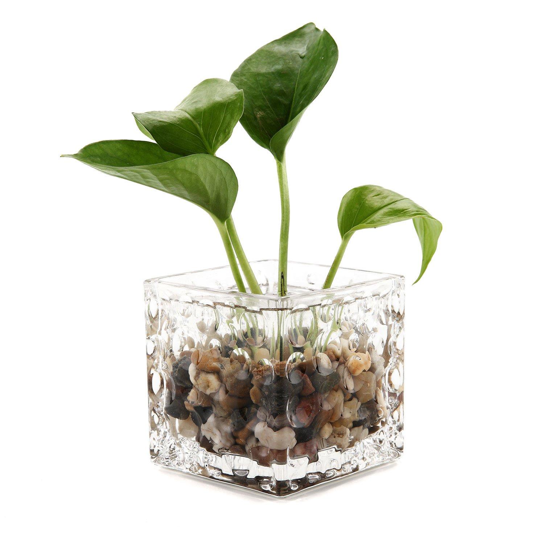 Amazoncom T4U Glass Hydroponic Pots Water Plants Vase Flower Planter