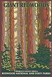 Redwood National Park, CA (9x12 Art Print, Wall Decor Travel Poster)