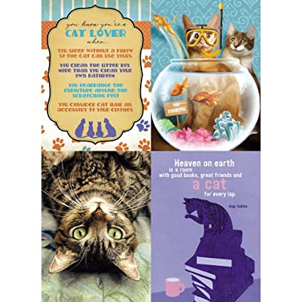 Tree Free Greetings Cat Lovers Birthday Wishes Card Assortment 5 X 7 Inches