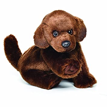 Amazon Com Nat And Jules Pawing Small Chocolate Labrador Dog