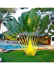 Maxtapos-20Pcs Rare tropicali piante perenni Fan Palms Cycas Tree Perenni Facile Coltivazione Semi Giardino Yard Decoration