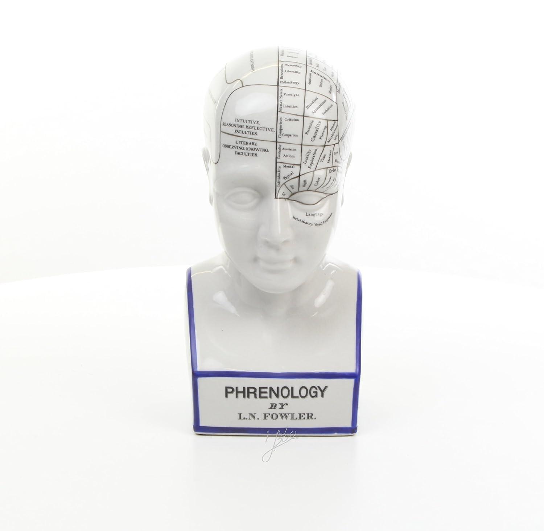 Decorazione testa testa scultura Busto phrenologie cranio Lehre porcellana altezza 30cm 1, 8kg Decoratie