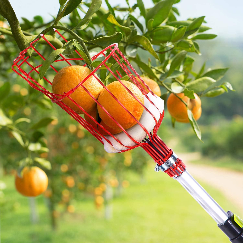 WOWOWO Recogedor de Frutas de pl/ástico 1 Uds sin Herramienta de recolecci/ón de jardiner/ía recolector de Frutas de Poste