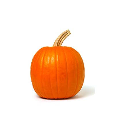 Autumn Gold Hybrid - Pumpkin Seeds, Non-GMO : Pumpkin Plants : Garden & Outdoor
