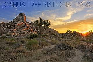 product image for Joshua Tree National Park, California, Sunrise 68516 (16x24 SIGNED Print Master Art Print, Wall Decor Poster)