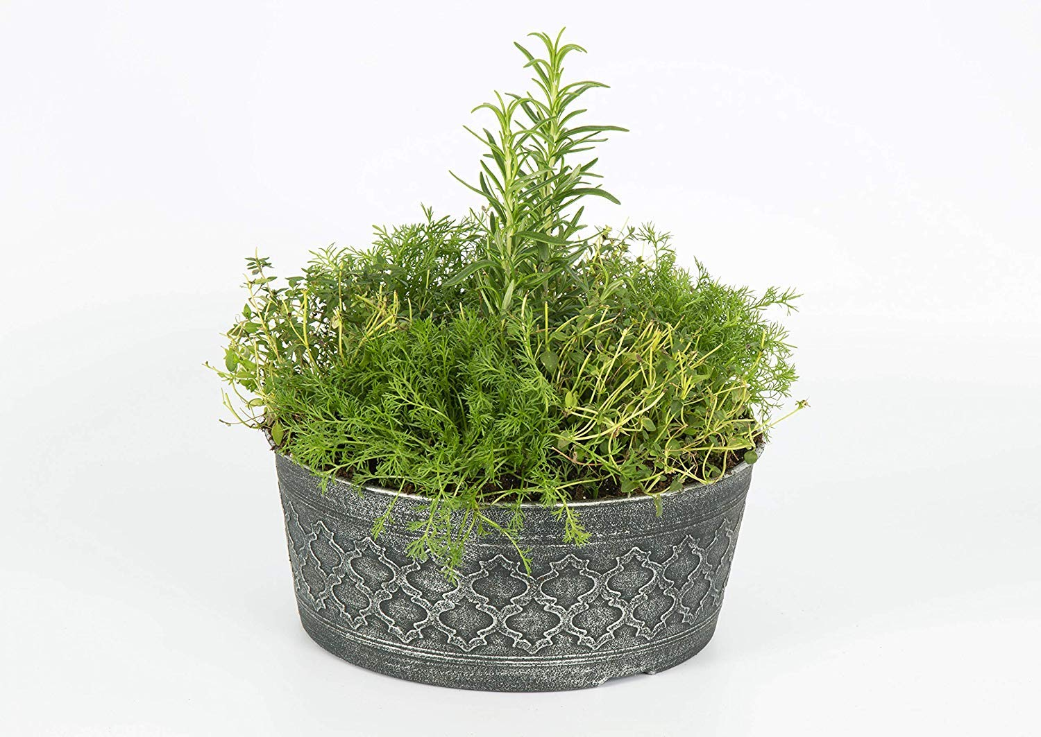 The Three Company Stress Relieving Live Aromatic 4'' Herb Combo (Lemon Balm, Rosemary, Chamomile) 1 Pint Pot Aids in Relaxation (Fоur Расk) by The Three Company (Image #6)