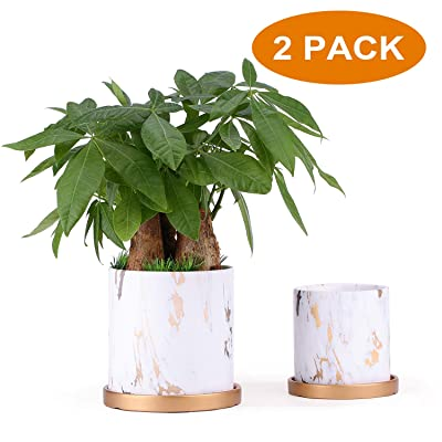5.5 & 4.2 Inch Ceramic Planters (Set of 2), Modern Flower Plant Pot, Gardening Pots with Drainage for Outdoor Indoor Yard Garden Home Office Decoration: Garden & Outdoor