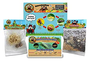 Bug Sales 1,500 Live Ladybugs & 2 Praying Mantis Eggs in Pouch & 1000 Green Lacewing Eggs Includes Ladybug Life Cycle Poster