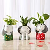 Ferns N Petals Set of 3 Air Purifying Plants in Multicolor Raisin Pots |Christmas Gift | Valentines Gift |Birthday Gift | Happy Year Gift