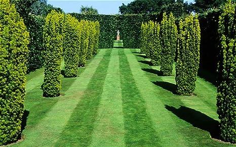20KG FINE GRASS SEED LAWN PRISTINE FINE LUXURY LAWN RYE FREE CERTIFIED