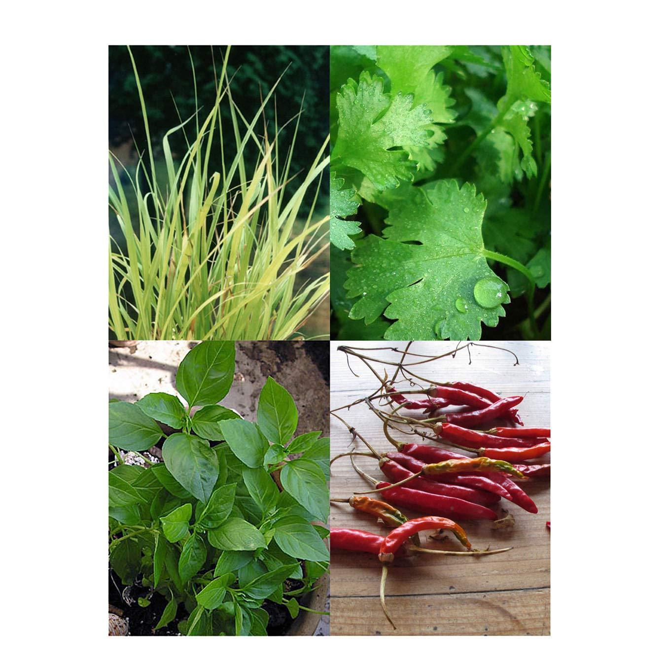 Magic Garden Seeds Hierbas de la Cocina tailandesa - Kit Regalo de ...