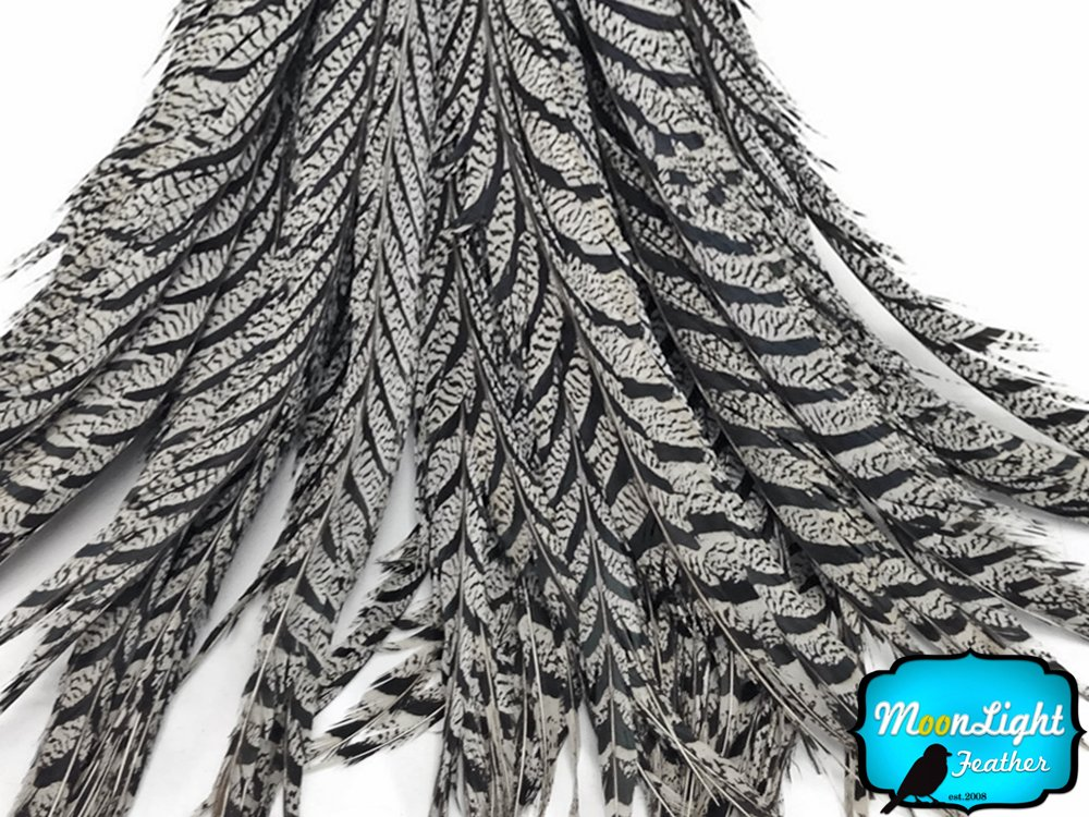 Moonlight Feather | 10 Pieces - 25-30'' Natural Black and White Zebra Lady Amherst Pheasant Tail Super Long Feathers Carnival, Costume, Party Supplies