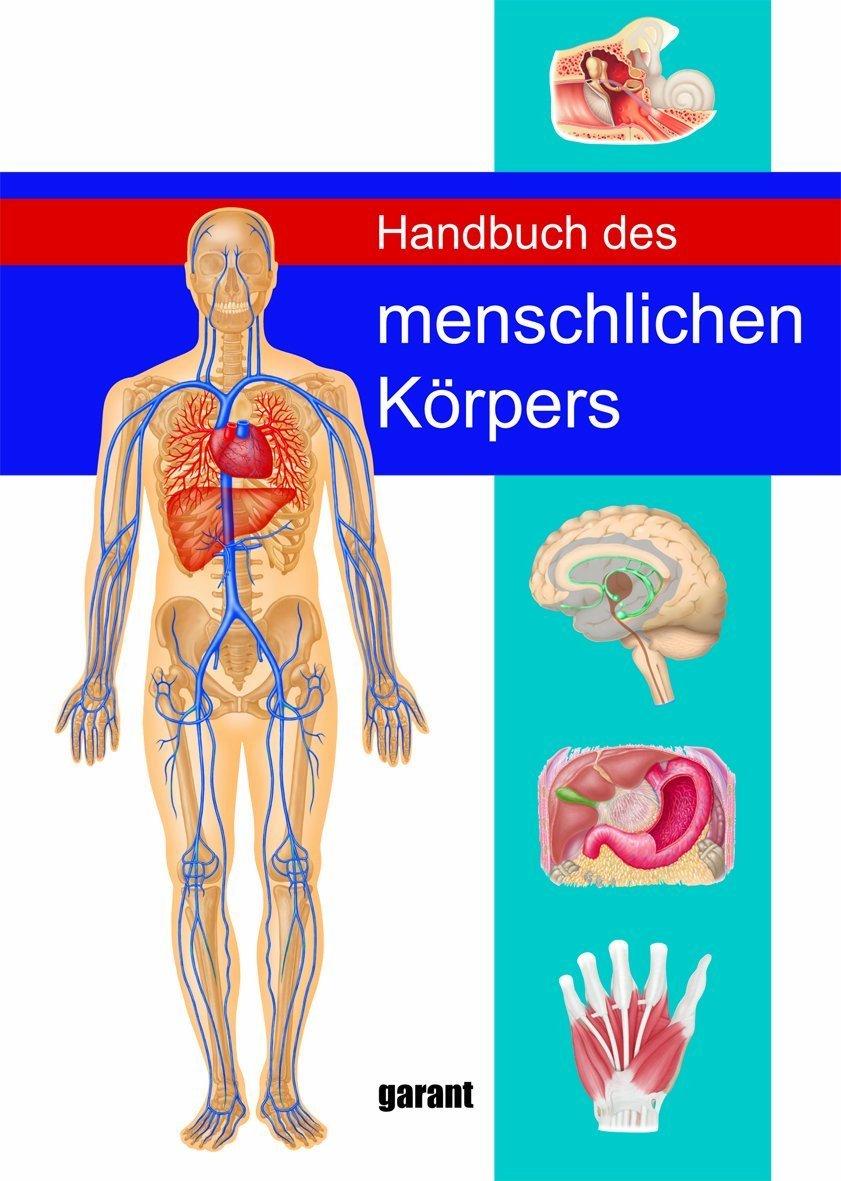 Erfreut Inneres Organ Tabelle Menschlichen Körper Bilder ...