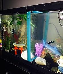 Fish tank divider 55 gallon for Fish tank divider 5 gallon