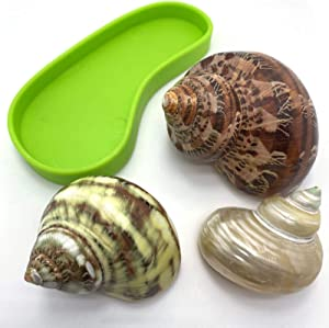Hermit Crab Shells + Food Water Bowl | Natural Turbo Growth Shells 3 Pcs | Sized 1.6'' 1.8'' 2.2'' | no painted medium Large shells | Openning Size 0.8