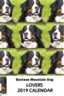 Amazon com : Bernese Mountain Dogs 2019 Wall Calendar : Office Products
