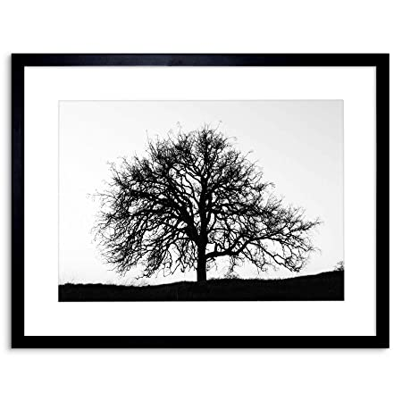 Wee Blue Coo Photo Tree Silhouette Black White Cool Stark Framed