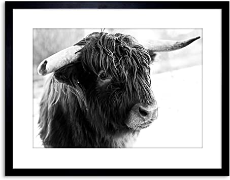 Photography Composition Animal Livestock Highland Cow Bull Canvas Art Print