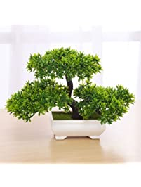 Amazon.com: Live Indoor Plants: Grocery & Gourmet Food: Bonsai ...