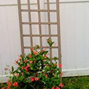 Amazon.com: dura-trel 11172 M Cambridge Trellis, Mocha ...