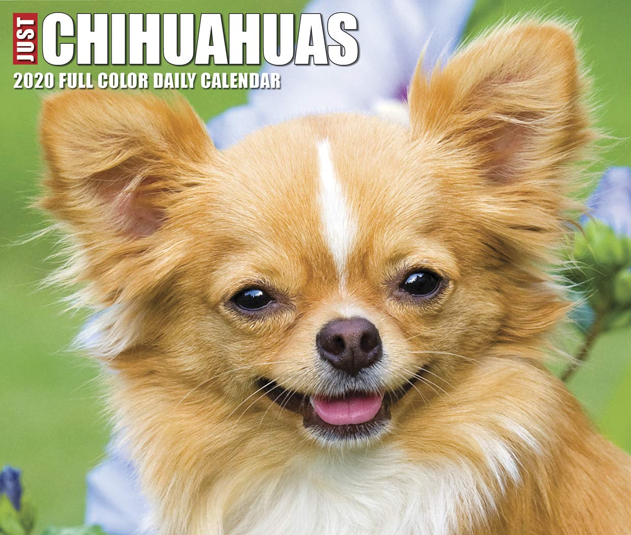 Akc Dog Show 2020.Just Chihuahuas 2020 Box Calendar Dog Breed Calendar