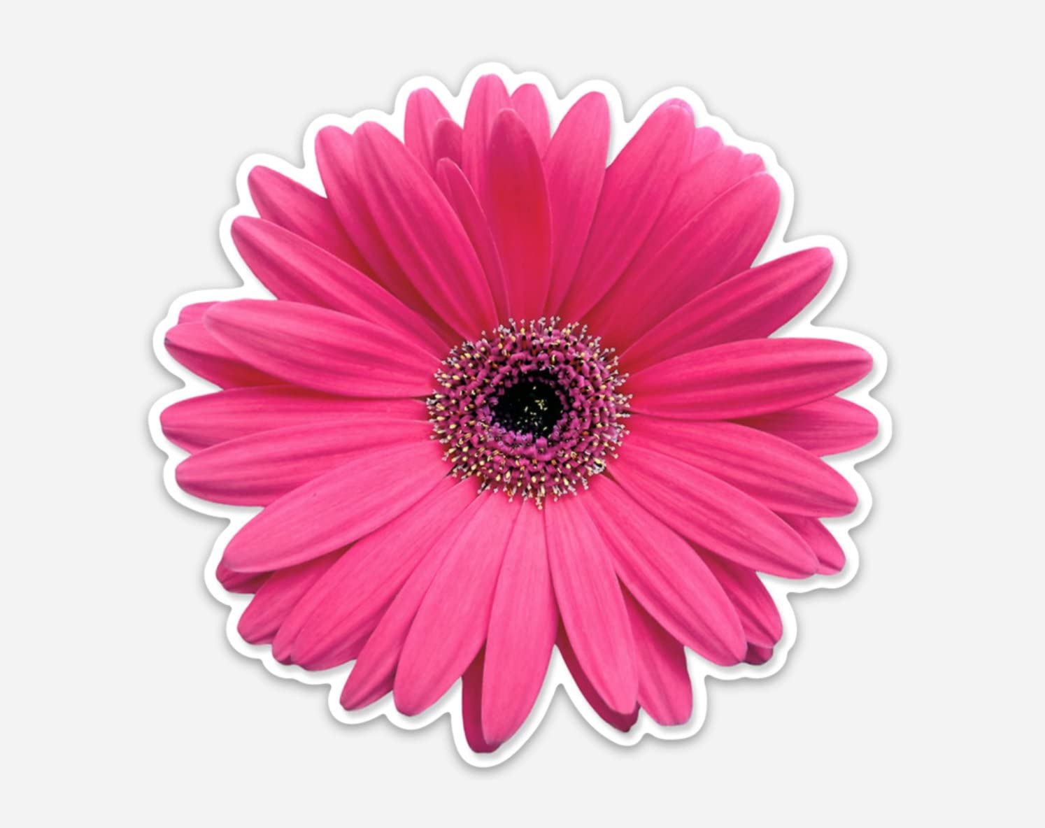 "Dark Pink Gerbera Daisy Laptop Wall Bumper Window Sticker 4"" by Pip and Co"