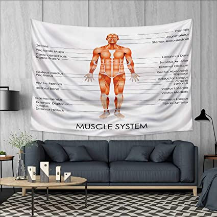 Amazon Anhuthree Human Anatomy Wall Tapestry Muscle System