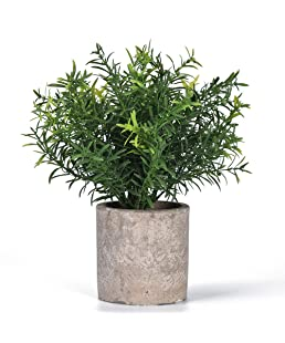 Shuheng Mini Artificial Plant Potted Fake Green Grass with Pot for Home Decor (Z, Green)