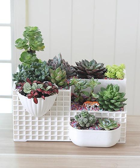 office pot plants. Plain Office Creative Flowers Pot Plastic Flower Pot Interior Office Desktop  Succulent Plants Green Plant Potted In T