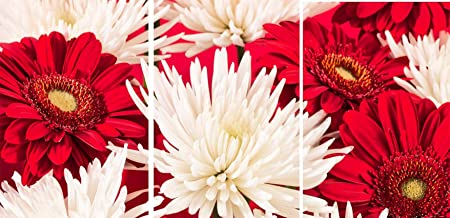 Red white chrysanthemum flower set of 3 canvas wall art pictures red white chrysanthemum flower set of 3 canvas wall art pictures mightylinksfo