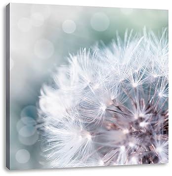 Zauberhafte Pusteblume Schwarz/Weiß, Format: 70x70 auf Leinwand, XXL ...