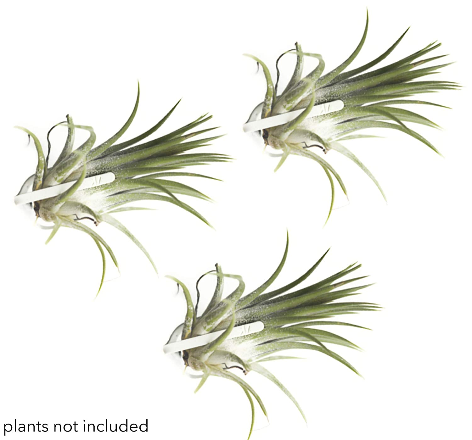 Air Plant Holder for Vertical Garden 3 Pack Air Plants House Plants make Great Wall Decorations for Living Room Wall Planters for Hanging Plant and Tillandsia Air Plants Living Wall Terrarium (White)
