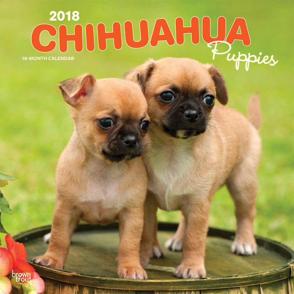 Amazon com: Chihuahua Puppies 2018 12 x 12 Inch Monthly
