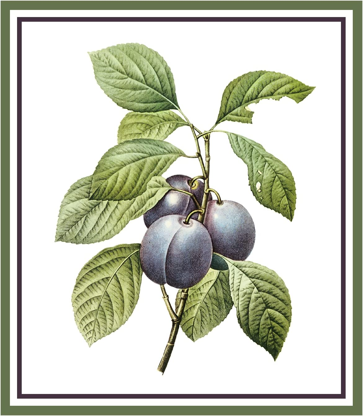 Orenco Originals Plums Botanical by Pierre-Joseph Redoute Counted Cross Stitch Pattern