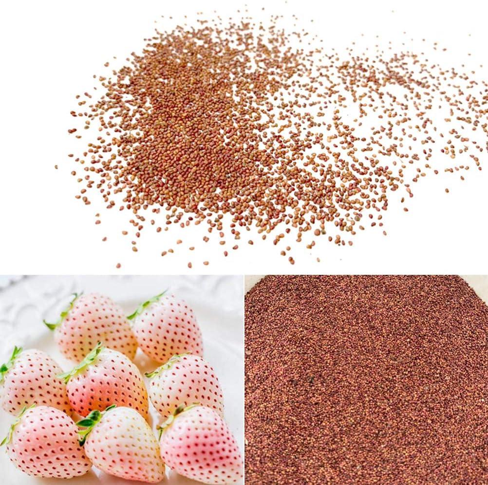 Bianco Yardwe 50 PZ Semi di Fragola per piantare Semi di Frutta al Coperto o allaperto per Piante in Vaso Bonsai casa Giardino piantare