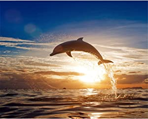 DIY Digital Paiting by Numbers Coding Oil Painting Framed with Box Sunset Dolphin Animals Wall Art for Home Decor 16×20inch Birthday Wedding Christmas Thanksgiving Gift for Children and Adults